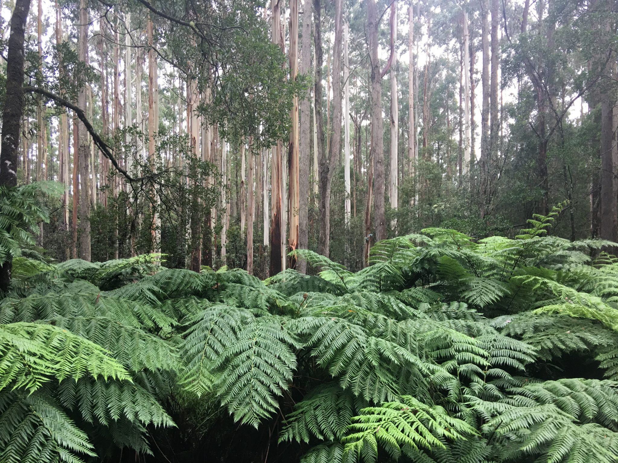114 - The Beauty of the Otway Ranges in Winter