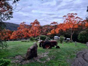 Tractor and orange trees 300x225 - Tractor and orange trees